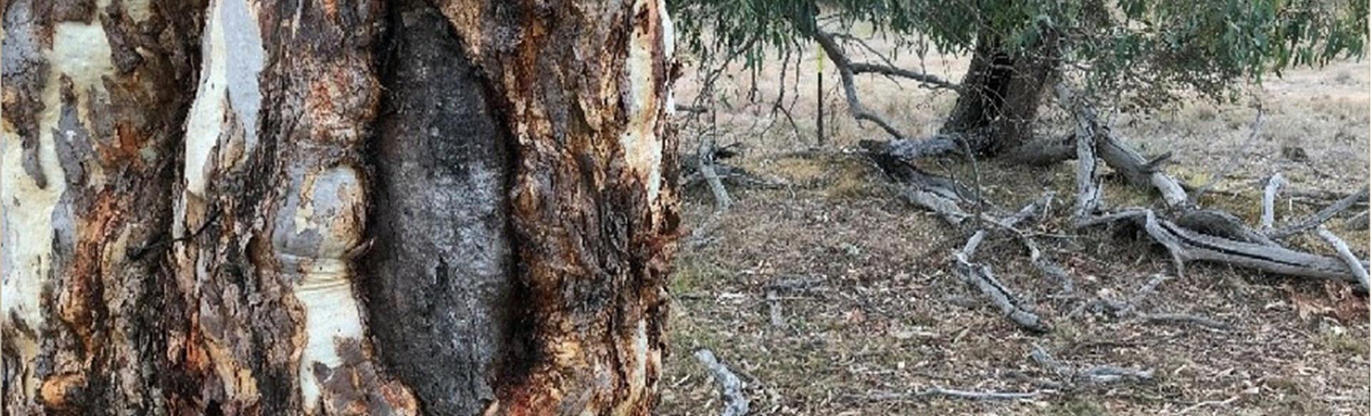 SACTCG – Aboriginal Landcare