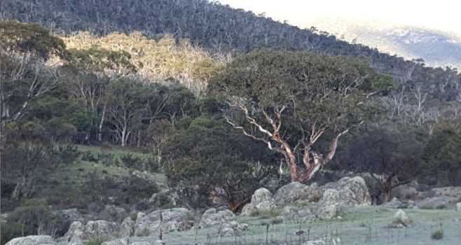 The Southern ACT Catchment Environment Fund