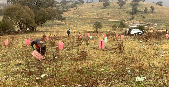 Urambi Hills Group