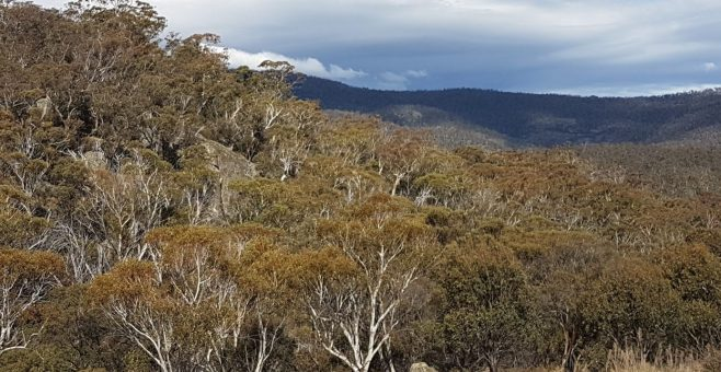 Namadgi Bushfire Recovery.