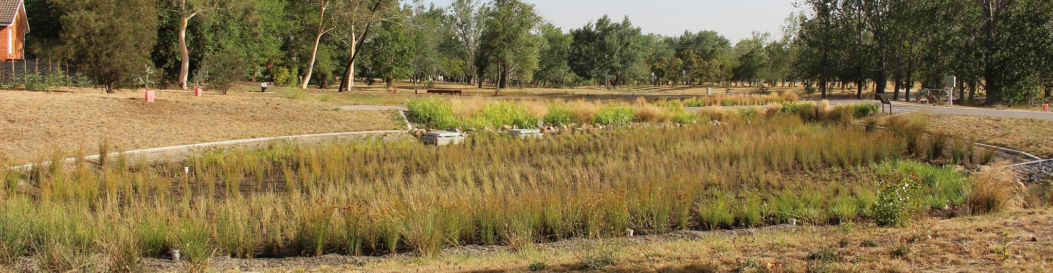 Reducing water pollution: How do rain gardens work in Canberra?