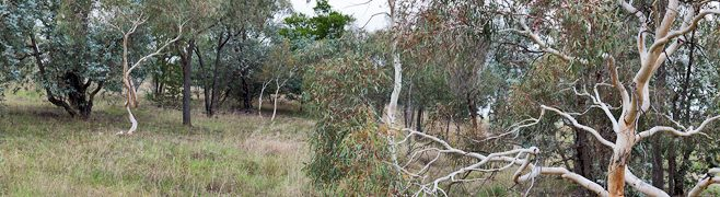 Oakey Hill Parkcare Group