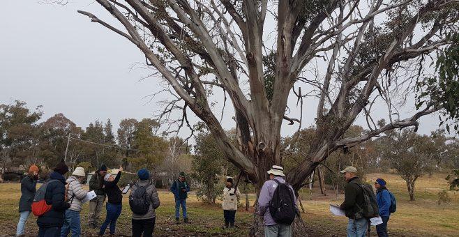 Tree Health Survey