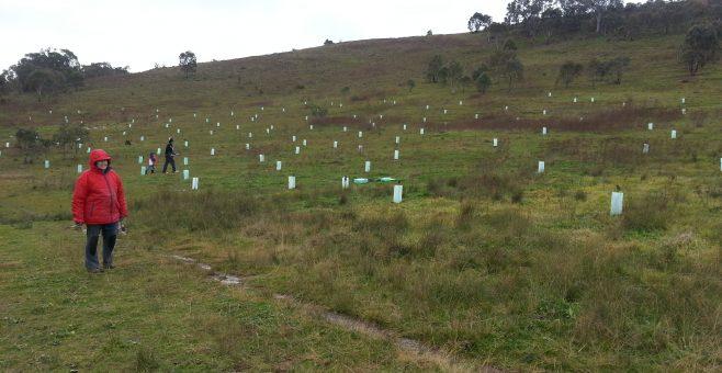 Urambi Hills Planting Day