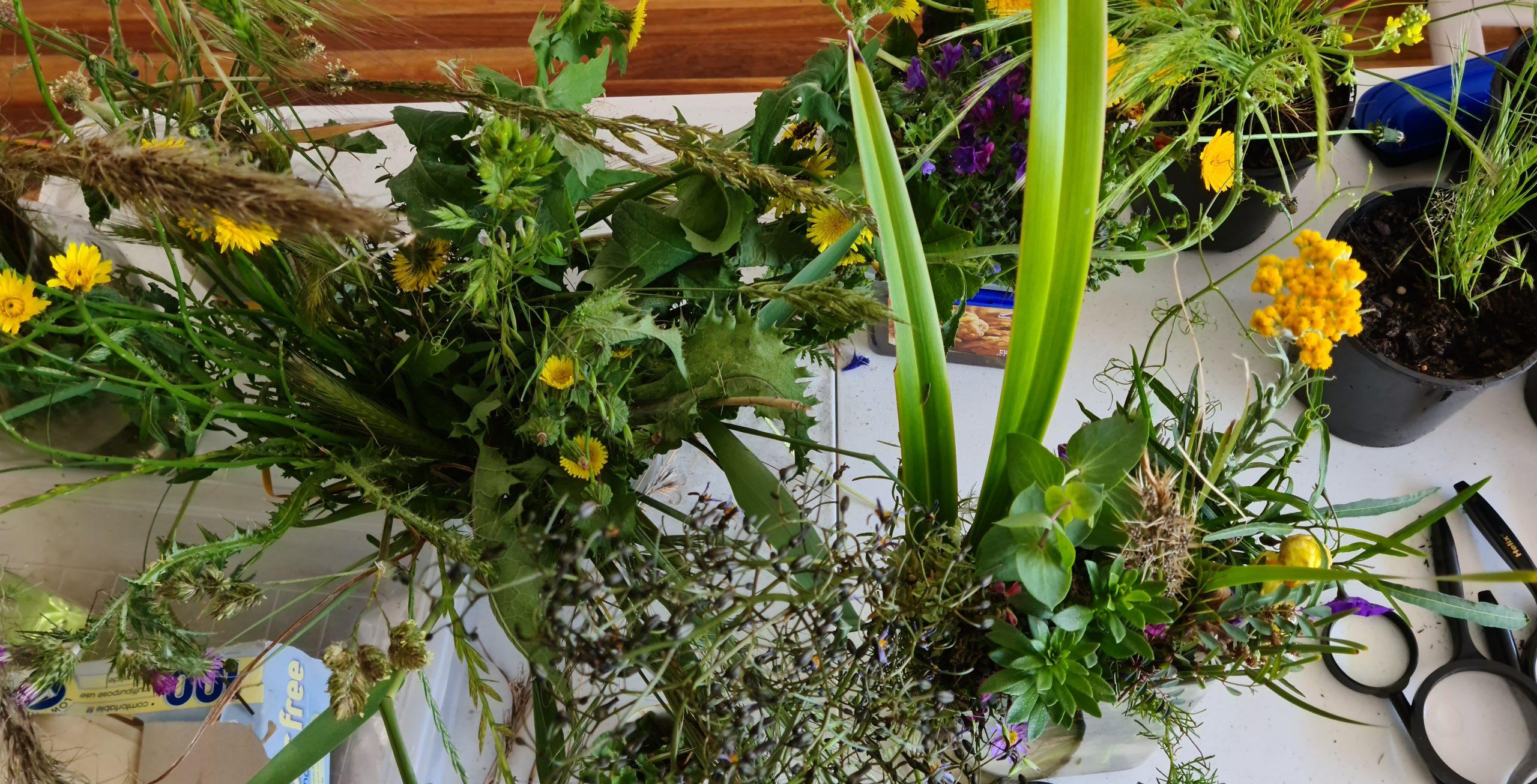 Local Grass Identification Workshop
