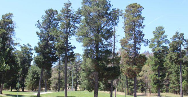 Fadden Pines Raingarden Walk and Talk